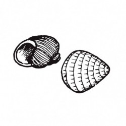 M. PVC CARACOLAS