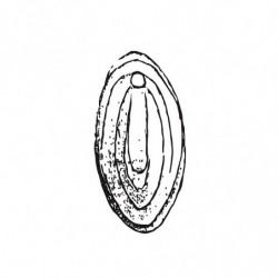 M. PVC VAGINA GRANDE 160x85mm (1i)